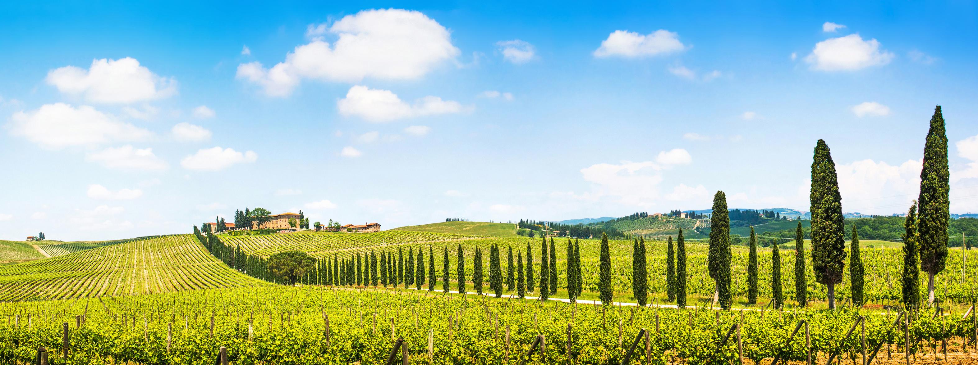 Italienische Weinlandschaft